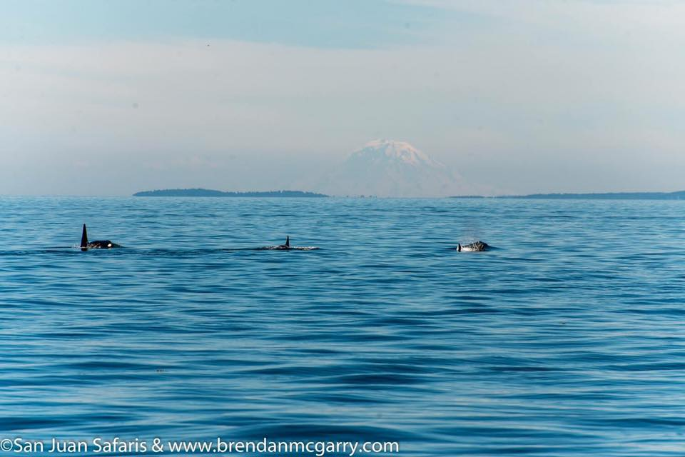 Best Place To See Whales On San Juan Island