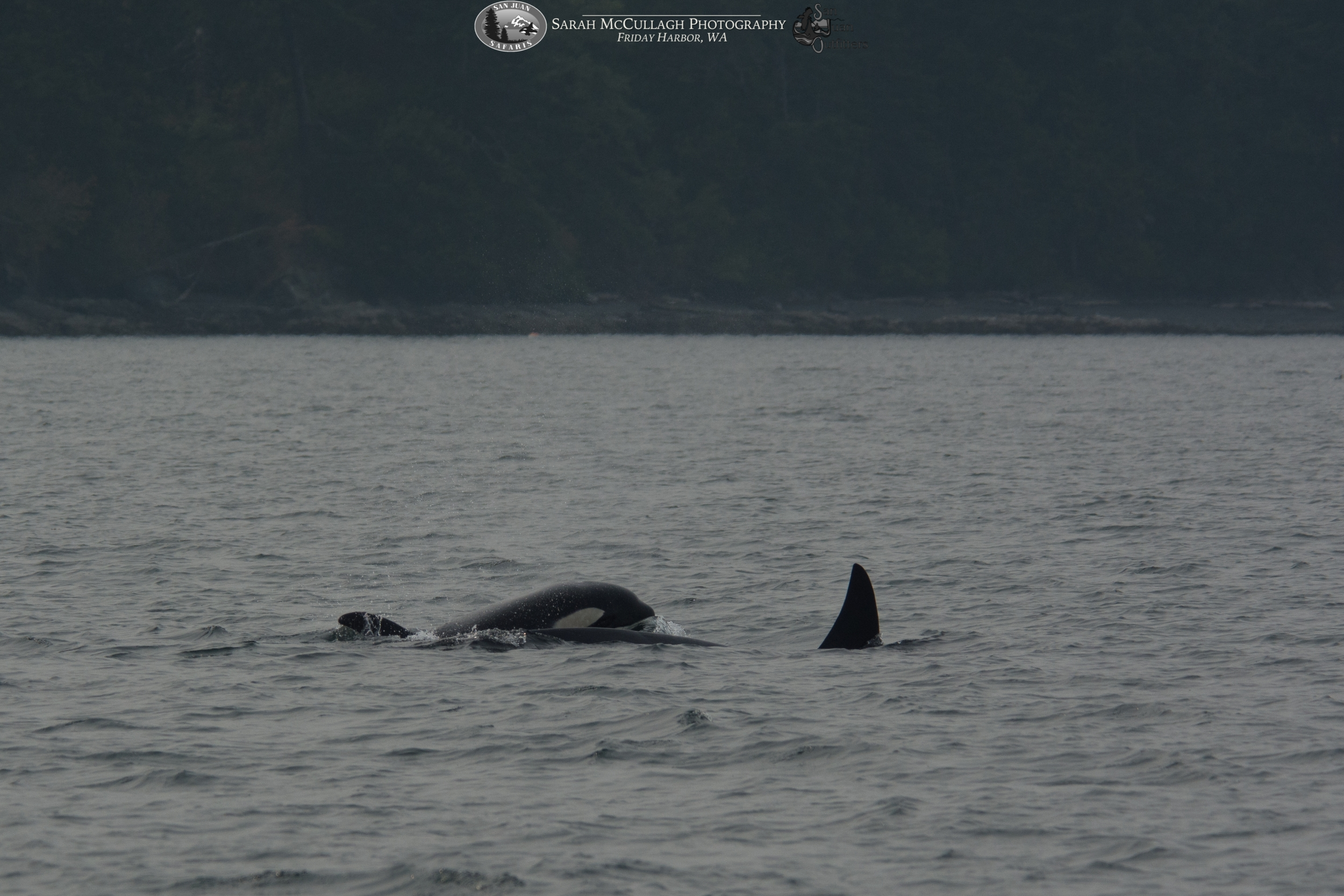 Orcas: T002C4 with T002C