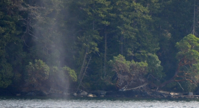 Humpback Whale Outside Roche Harbor!