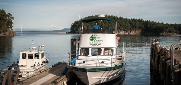 Whale watch with the MV Sea Hawk with San Juan Island Outfitters