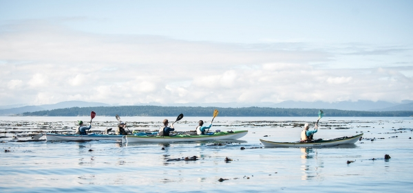 About San Juan Outfitters Kayaking and Whale Watching
