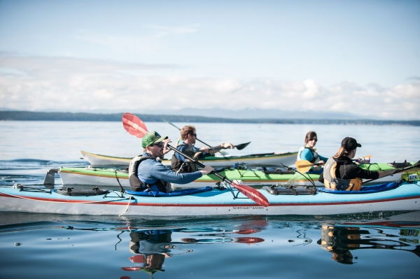 Spotting marine wildlife by sea kayak tour from Roche Harbor