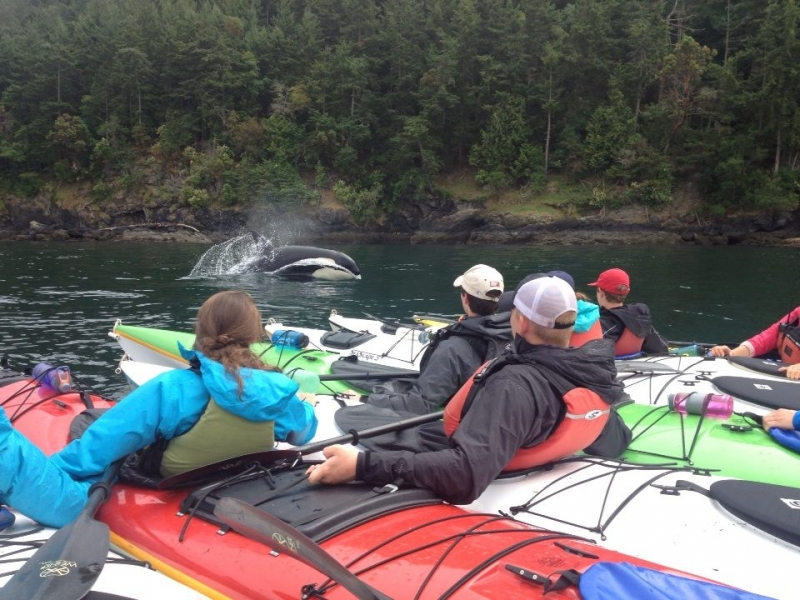 Kayak with whales in the San Juans