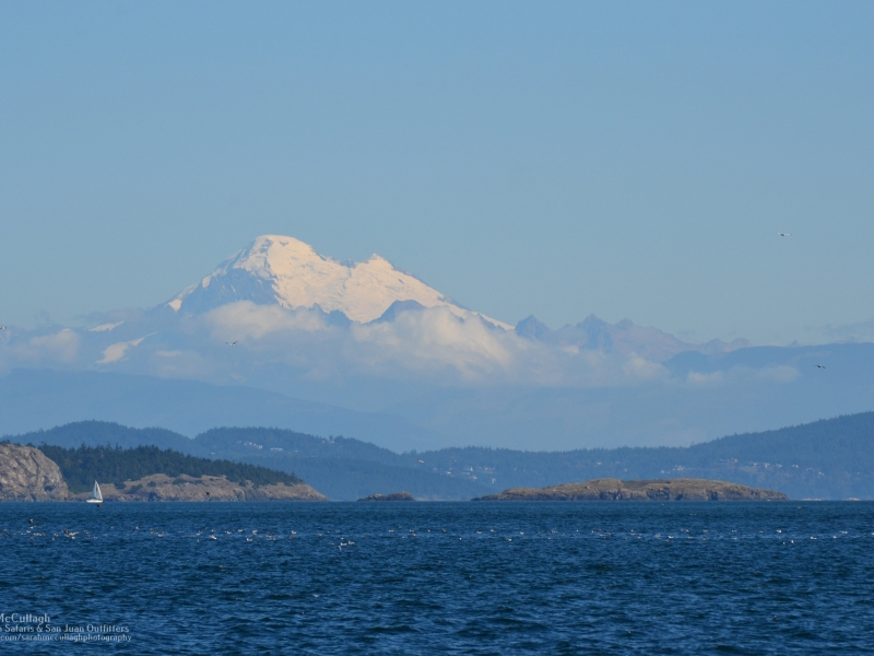 View scenic vistas while kayaking, hiking, and biking with San Juan Island Outfitters