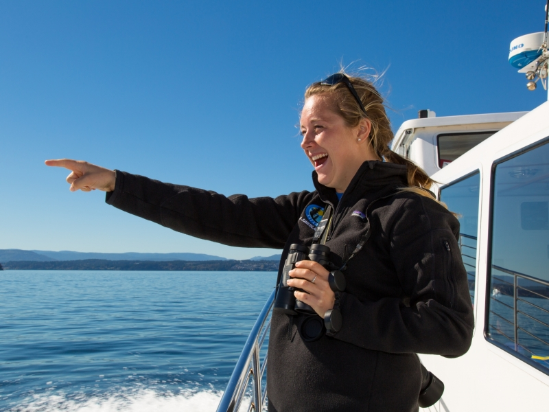 Go whale watching with friends, family, or charter one of our boats for a private event in the San Juan Islands