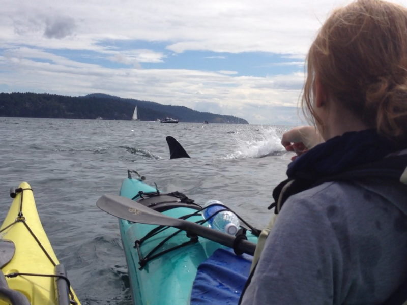 San Juan Outfitters sea kayaking with killer whales