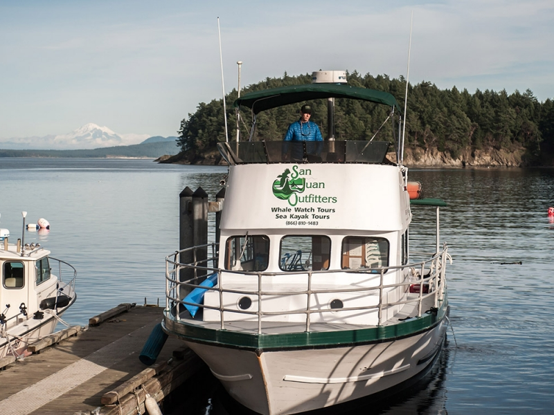 Combine your kayak camping trip with whale watching by motor vessel to see wildlife in the the San Juan Islands
