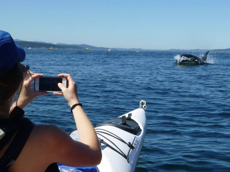 Photograph orcas from a kayak with San Juan Island Outfitters
