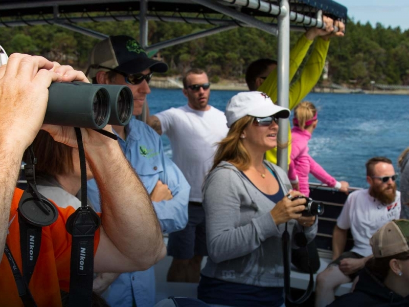 Learn about orca's and humpbacks while whale watching with San Juan Outfitters