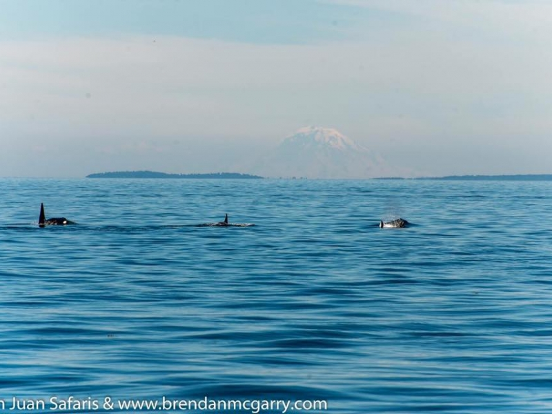 Kayak with orcas and see views of Mt. Rainer in the Distance