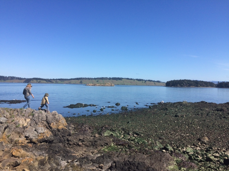 Go tidepooling with your family on a guided San Juan Outfitters kayak tour