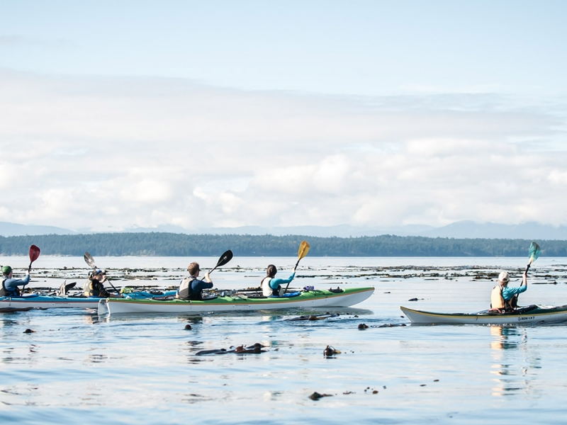 Explore the San Juan Islands and kayak with orcas