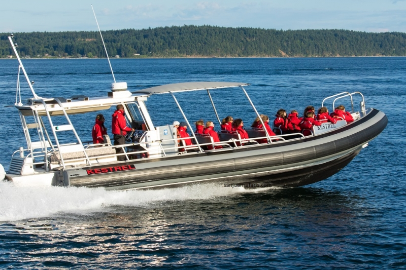 See humpbacks and orcas with the Kestrel off of San Juan Island